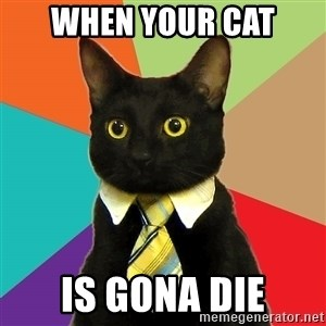 Business Cat - when your cat is gona die