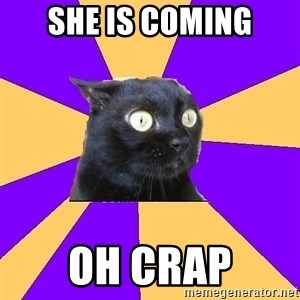 Anxiety Cat - she is coming Oh cRAP
