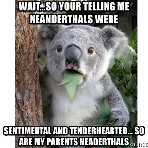 surprised koala - wait...So your telling me neanderthals were   sentimental and tenderhearted... SO are my parents Neaderthals