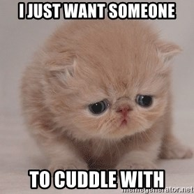 Super Sad Cat - i just want someone to cuddle with