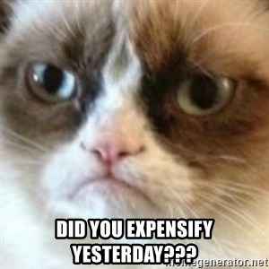 angry cat asshole - Did you Expensify yesterday???