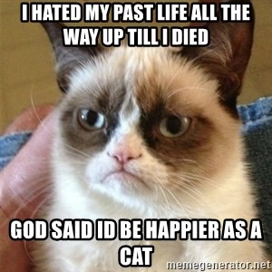 Grumpy Cat  - I hated my past life all the way up till I died God said id be happier as a cat
