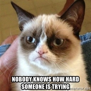 Grumpy Cat  - Nobody knows how hard someone is trying