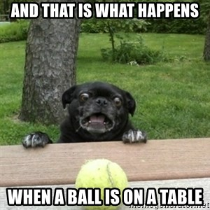 Ermahgerd Pug - And that is what happens when a ball is on a table
