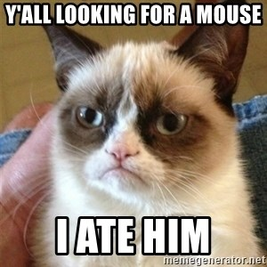 Grumpy Cat  - y'all looking for a mouse I ate him