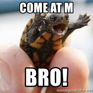 angry turtle - Come at m Bro!