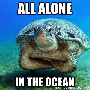 disappointed turtle - All alone  In the ocean