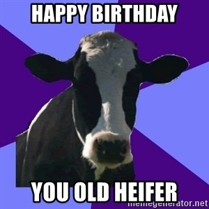 Coworker Cow - Happy Birthday You old heifer