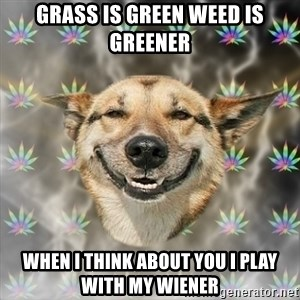 Stoner Dog - grass is green weed is greener when i think about you i play with my wiener
