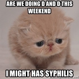 Super Sad Cat - Are We doing d and d this weekend I might has syphilis