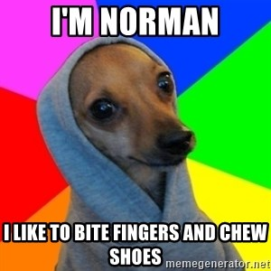 Good Guy Greg's dog - I'm Norman I like to bite fingers and chew shoes
