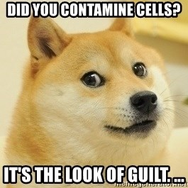 Dogeeeee - Did you contamine cells?  It's the look of guilt. ...