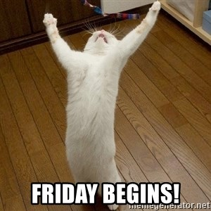 praise the lord cat - Friday begins!