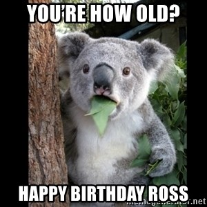 Koala can't believe it - You're How Old?  Happy Birthday Ross