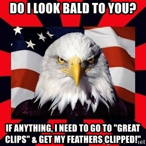 """Bald Eagle - DO I LOOK BALD TO YOU? IF ANYTHING, I NEED TO GO TO """"GREAT CLIPS"""" & GET MY FEATHERS CLIPPED!"""""""