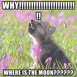 Baby Insanity Wolf - WHY!!!!!!!!!!!!!!!!!!!!!!!!! Where is the moon??????