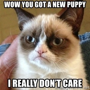 Grumpy Cat  - Wow you got a new puppy I really don't care