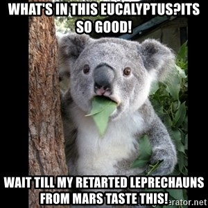 Koala can't believe it - What's in this eucalyptus?its so good! wait till my retarted leprechauns from mars taste this!