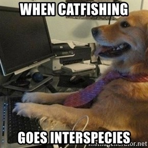 I have no idea what I'm doing - Dog with Tie - when catfishing goes interspecies