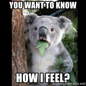 Koala can't believe it - you want to know  how I feel?