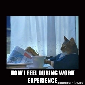 i should buy a boat cat - How i feel during work experience