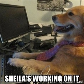 I have no idea what I'm doing - Dog with Tie - SHEILA'S WORKING ON IT