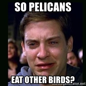 crying peter parker - so pelicans  eat other birds?