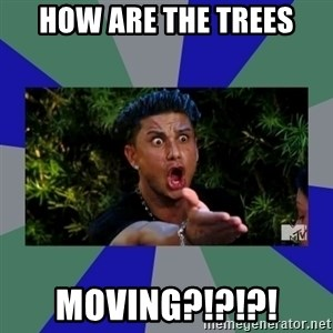 jersey shore - How are the trees MOVING?!?!?!