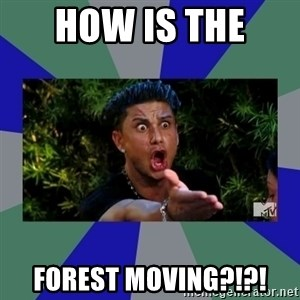 jersey shore - how is the  forest moving?!?!