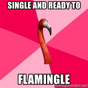 Fanfic Flamingo - single and ready to flamingle
