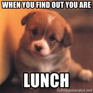 cute puppy - When you find out you are Lunch