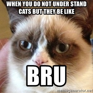 Angry Cat Meme - when you do not under stand cats but they be like  bru