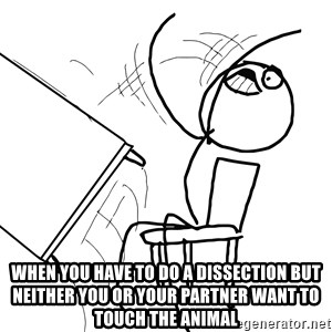Desk Flip Rage Guy - When you have to do a dissection but neither you or your partner want to touch the animal