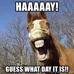 Horse - Haaaaay! Guess what day it is!!
