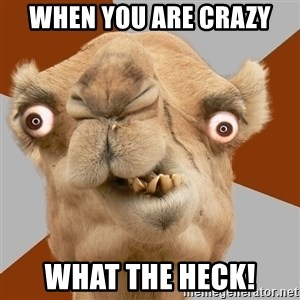 Crazy Camel lol - When you are crazy What the heck!