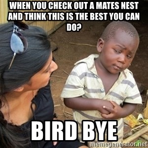 Skeptical 3rd World Kid - When you check out a mates nest and think this is the best you can do?  BIRD BYE