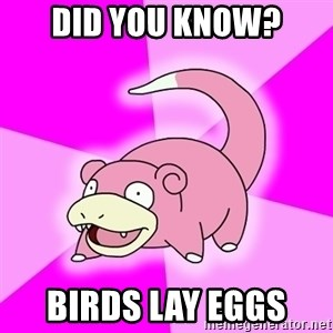 Slowpoke - Did you know? Birds lay eggs