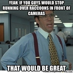 That would be great - Yeah, if you guys would stop running over raccoons in front of cameras That would be great