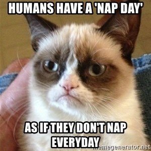 Grumpy Cat  - HUmans have a 'Nap Day' As if they don't nap everyday