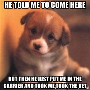 cute puppy - He told me to come here But then he just put me in the carrier and took me took the vet