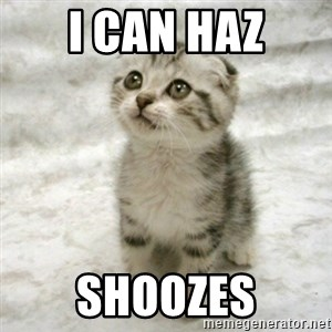Can haz cat - i can haz shoozes