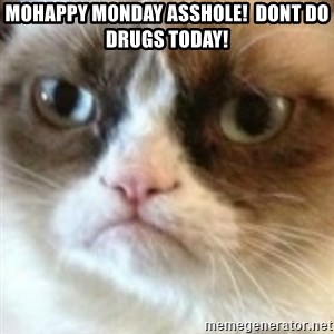 angry cat asshole - MoHappy Monday Asshole!  Dont do drugs today!