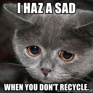 sad cat - I haz a sad When you don't recycle.
