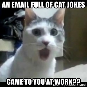 Surprised Cat - An email full of cat jokes came to you at work??