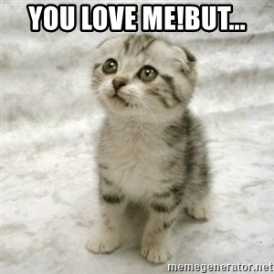 Can haz cat - You love me!But...