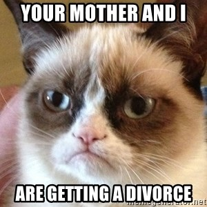 Angry Cat Meme - Your mother and I  Are getting a divorce