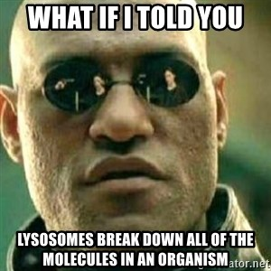 What If I Told You - What if i told you lysosomes break down all of the molecules in an organism