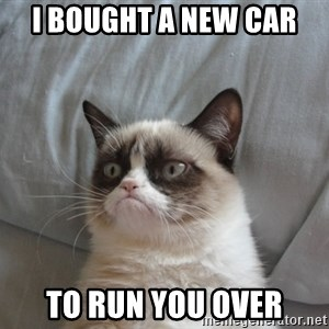 Grumpy cat good - i bought a new car to run you over
