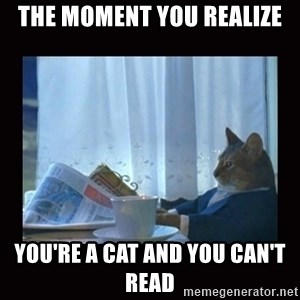 i should buy a boat cat - The moment you realize you're a cat and you can't read