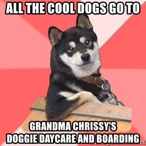 Cool Dog - All the cool dogs go to  Grandma chrissy's                  doggie daycare and boarding